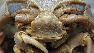 getlinkyoutube.com-Wydobyty z oceanicznych głębin. Jego rozmiary to wciąż zagadka [Pixel
