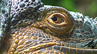 getlinkyoutube.com-Sony 1080i HD close-ups & Macros - Nature Unleashed -