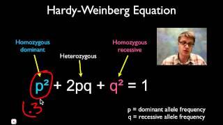 getlinkyoutube.com-Solving Hardy Weinberg Problems