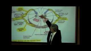 getlinkyoutube.com-THE SPINAL CORD & SPINAL TRACTS; PART 1 by Professor Fink