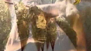 getlinkyoutube.com-Тоника - Пролет   VBOX72.flv