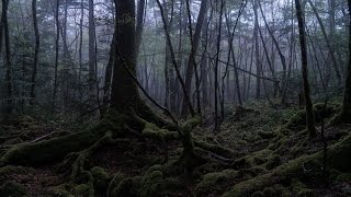 EXPLORING Suicide Forest Aokigahara, Japan ( 青木ヶ原 )