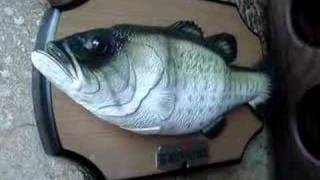 getlinkyoutube.com-Big Mouth Billy Bass