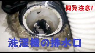 getlinkyoutube.com-洗濯機の排水口 掃除しないとこうなる ビートウォッシュC4エラー
