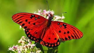 getlinkyoutube.com-Butterfly - My animal friends - Animals Documentary -Kids educational Videos