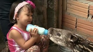getlinkyoutube.com-Ayumi aventureira: conheça a garotinha que vive rodeada de animais selvagens