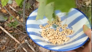 Foraging - You Suck at Cooking (episode 16) width=