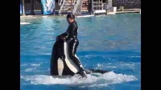 getlinkyoutube.com-عرض الحيتان القاتلة بسان دييجو 2 San Deigo Seaworld's Shamu