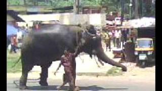 getlinkyoutube.com-Elephant attack-Global Wayanad, Meenangadi