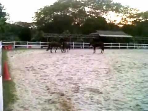 Putri Mandi Telanjang with Horse Soldier