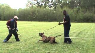 getlinkyoutube.com-Manson Family Bandogs Kimbo