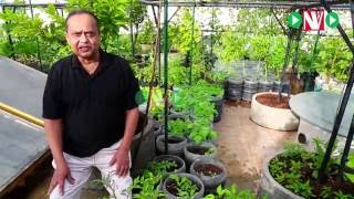 How to Start Your Organic Terrace Garden-Harish Mysore 1