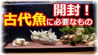 getlinkyoutube.com-古代魚に必要なもの!?【アクアリウム開封】