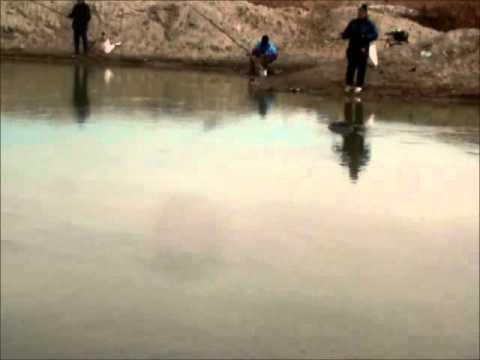 Pescuit la oblete cu taparina 8 ianuarie 2012.avi