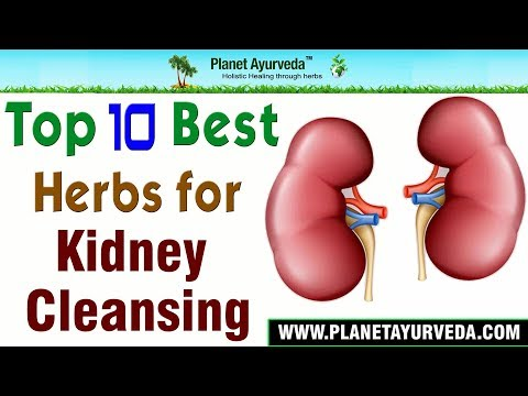 Top 10 Best Herbs for Kidney Cleansing | Detox Your Kidneys Naturally | Improve Kidney Functions