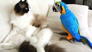 getlinkyoutube.com-Funny Parrots Annoying Cats Compilation || NEW HD
