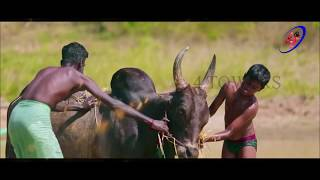 jallikattu 2018 song PUZHUTHIPARAKKA song official video music by ROCK M.S.R