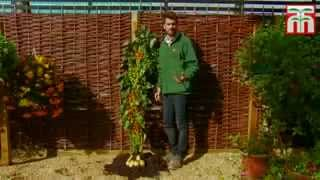 getlinkyoutube.com-نبته تحمل الطماطم و البطاطس في آنٍ واحد!