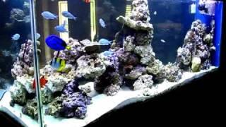 getlinkyoutube.com-Reef Aquarium