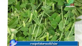 getlinkyoutube.com-รอบรู้ข่าวเกษตร การปลูกถั่วลันเตาแบบใช้น้ำน้อย