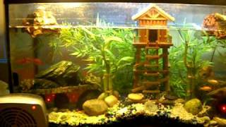 AL's 40 gallon turtle tank .