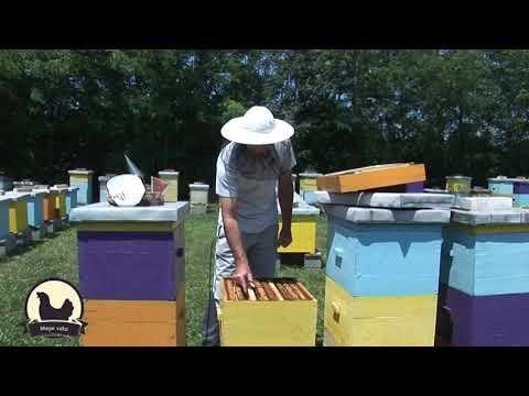 Iskustva profi-pčelara: Formiranje i nega prirodnog, veštačkog i trutovskog roja tokom leta
