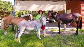 getlinkyoutube.com-Ponies, Horses, Donkeys, & Mules: Everything you need to know.