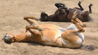 getlinkyoutube.com-Αστεία άλογα - μια αστεία βίντεο άλογο. Συλλογή