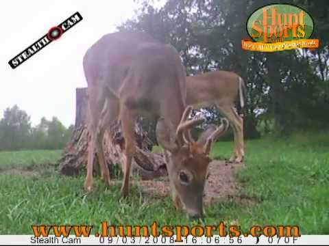 B&C Rut Bucks Whitetail Deer StealthCam Scouting Foodplots Feeder IR Infrared DeerCam Bears