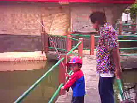 Mancing Ikan Bawal - Pacu Fishing - Pacu on Minnow