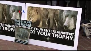 Dihujani Kritik, Presiden Trump Tangguhkan Pencabutan Larangan Suvenir Gajah Buruan
