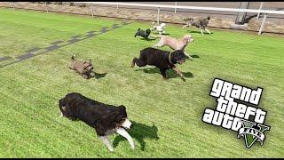 getlinkyoutube.com-GTA V - CORRIDA DE CACHORROS QUAL DOG MAIS RÁPIDO?