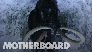 The-Mission-to-Resurrect-the-Woolly-Mammoth width=