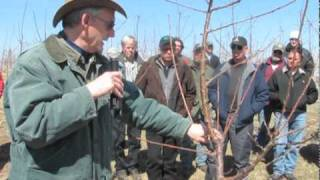 getlinkyoutube.com-Sweet Cherry Pruning — FGNtv