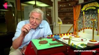 Watch | David Attenborough's Natural Curiosities: The Flea Circus