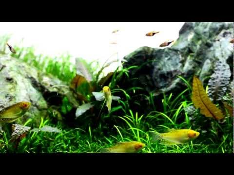 Aquarium video