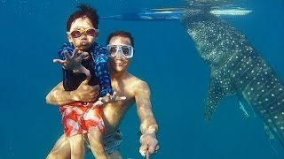 getlinkyoutube.com-GoPro: Whaleshark Dive in the Philippines