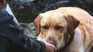 getlinkyoutube.com-Far From Home: The Adventures Of Yellow Dog Trailer 1994