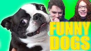 getlinkyoutube.com-TRY NOT TO LAUGH - Funny Dogs Compilation Challenge