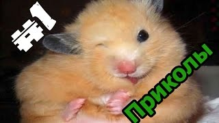 getlinkyoutube.com-#1 More Jokes - Лучшие приколы про хомяков 2016/The best jokes about hamsters 2016