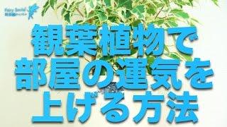 getlinkyoutube.com-風水 開運 観葉植物で部屋の運気を上げる方法