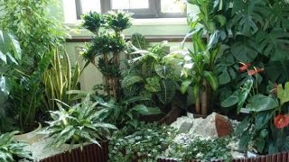 getlinkyoutube.com-Какие комнатные растения подойдут для ТЕМНЫХ ПОМЕЩЕНИЙ