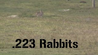 getlinkyoutube.com-Suppressed .223 Rabbit Hunting