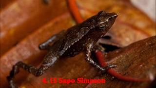 getlinkyoutube.com-Encuentran extraños Animales los mas raros encontrados . (documental)