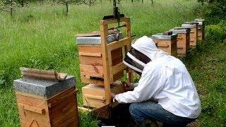 getlinkyoutube.com-TÉMOIGNAGES - l'apiculture naturelle en ruche Warré - rucher école Villa le Bosquet