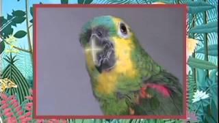 getlinkyoutube.com-Papagaio Louro - Cantigas de Roda
