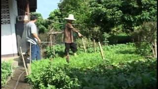 getlinkyoutube.com-สวนหลังบ้าน ผักปลอดสารพิษ