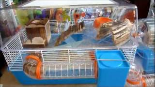 getlinkyoutube.com-Hamster Care: Cage Tour