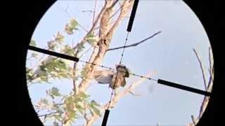 getlinkyoutube.com-Pest control shooting with air rifle