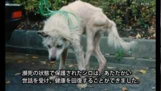 getlinkyoutube.com-ハンカチぶんこ「実験犬シロのねがい」より―問われる動物実験
